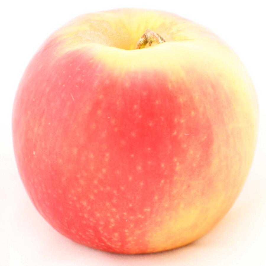 Green+Apples+Names Apples Photos (Clip Art)