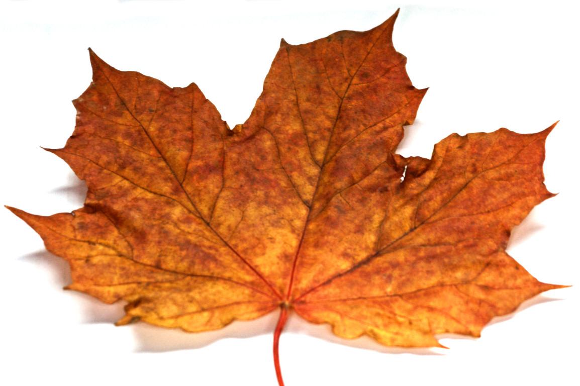 About this album Autumn Leaves