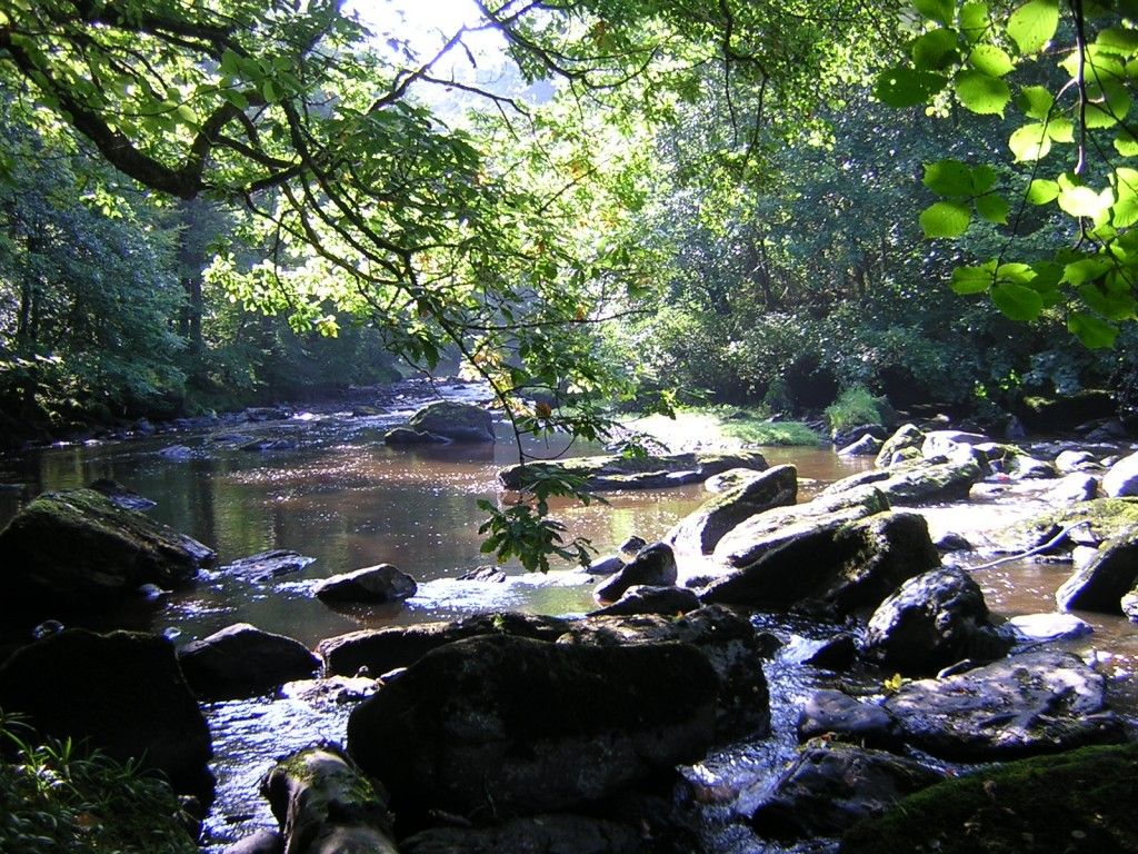 River roe images videos