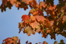 Autumn Leaves 7