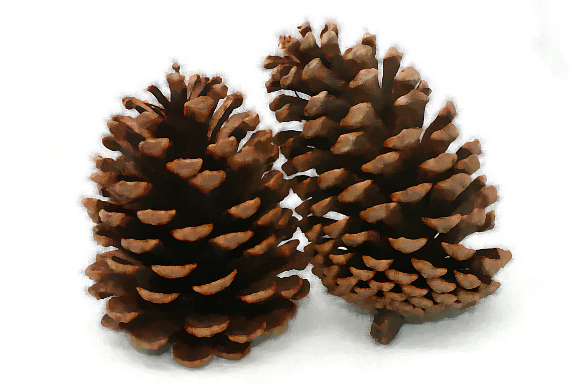 dream pine cone artwork 21 photo tierra este 4545